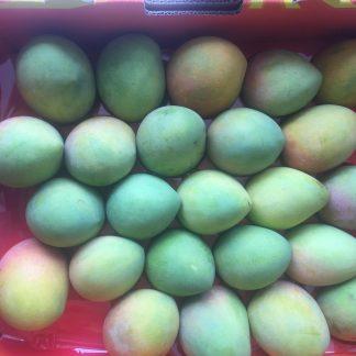 tray mango