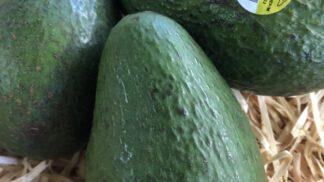 Avocado sharwil